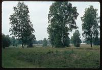 Bergen-Belsen Concentration Camp : View across site from site entry walk