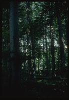 Buchenwald Concentration Camp : Beech tree woods along memorial site entry road