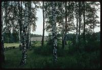 Chelmno Concentration Camp : View of main memorial through trees on-site
