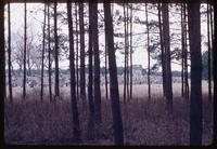 Treblinka Concentration Camp : Rear view from among the trees on site