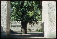 Plötzensee Prison (Berlin, Germany) : Entry memorial garden space and tree