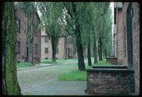 Auschwitz Concentration Camp : Further view of barracks row along the same camp road