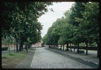 Theresienstadt Concentration Camp : Treed entry walk near main entry gate