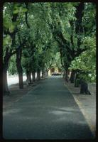 Theresienstadt Concentration Camp : Treed entry walk from parking area to fortress/camp