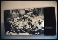 Buchenwald Concentration Camp : Post-liberation photo of bodies at the crematorium