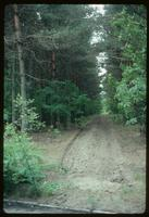 Sobibór Concentration Camp : Pine plantation across Wlodawa Road along camp perimeter