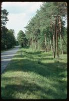 Sobibór Concentration Camp : Road to Wlodawa with the camp on the left