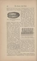 Mrs. Lincoln's Boston cook book : what to do and what not to do in cooking Page 58