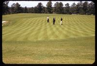 A massive golf green surface at the Peachtree Golf Club, Georgia, in 1955