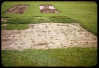 Bermudagrass and Zoysiagrass experimental plots established 7 weeks earlier Toro Research Center, Minnesota, 1953