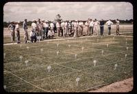 Field day attendees view turf fertility research plots at Texas A&M University in 1952