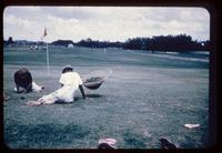 Barefoot sitting men removing crowfoot weeds by hand on a golf green at the BraeBurn Country Club in Houston, Texas, in 1952
