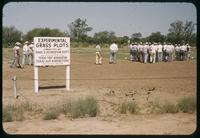 Attendees view turf research plots during the Texas Turf Association Field Day in Wichita Falls, 1953
